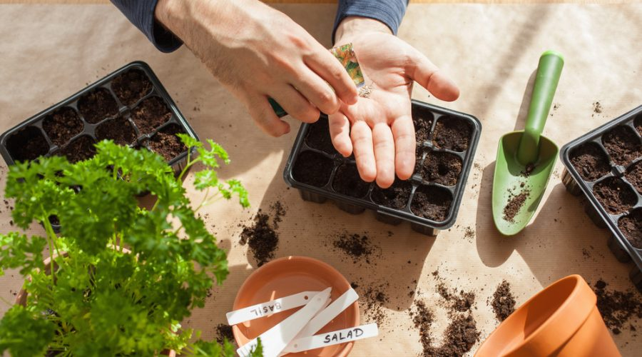 All You Need to Learn About Growing Vegetables Indoors