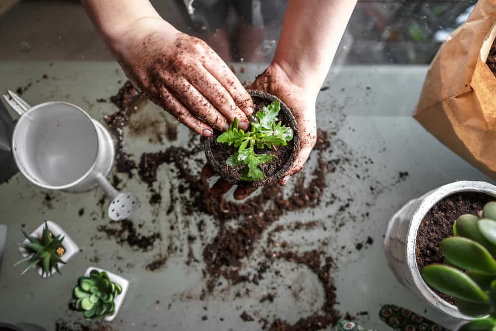 Why is Gardening a Stress Reliever?